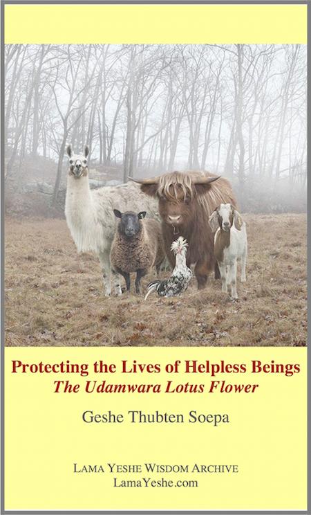 The Udamwara Lotus Flower: Protecting the Lives of Helpless Beings